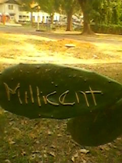 What does Millicent mean? Millimetre-centimetre??